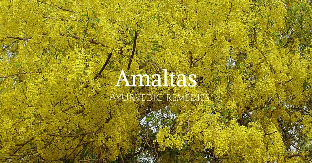 amaltas flower