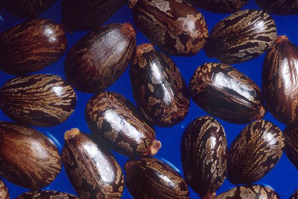 catsor oil