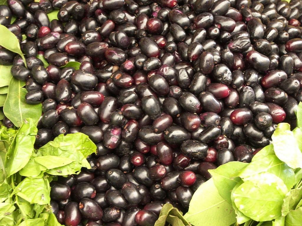 Jamun medicinal Uses