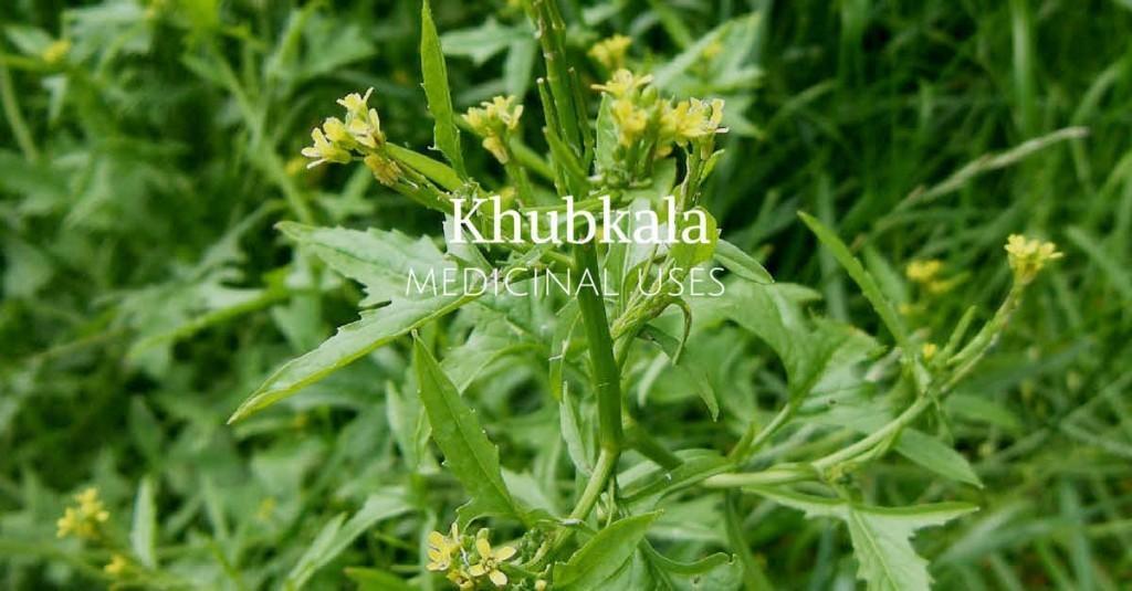 Khoobkala