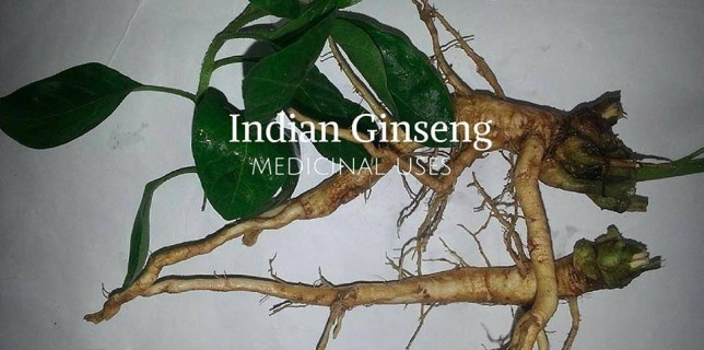 अश्वगंधा Ashwagandha detail, benefits and uses in Hindi
