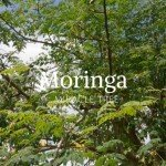 moringa-leaves