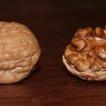 Walnut benefits