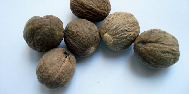 जायफल के औषधीय प्रयोग और दुष्प्रभाव Nutmeg in Hindi