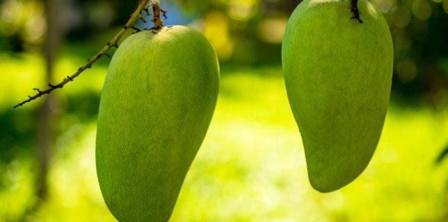 Mango health benefits